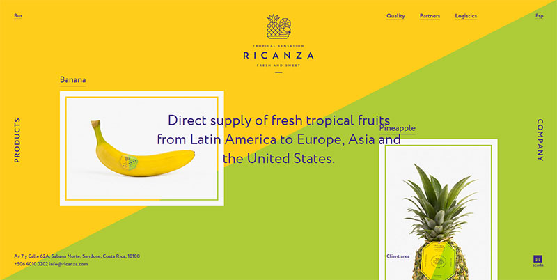 Webdesign Ricanza