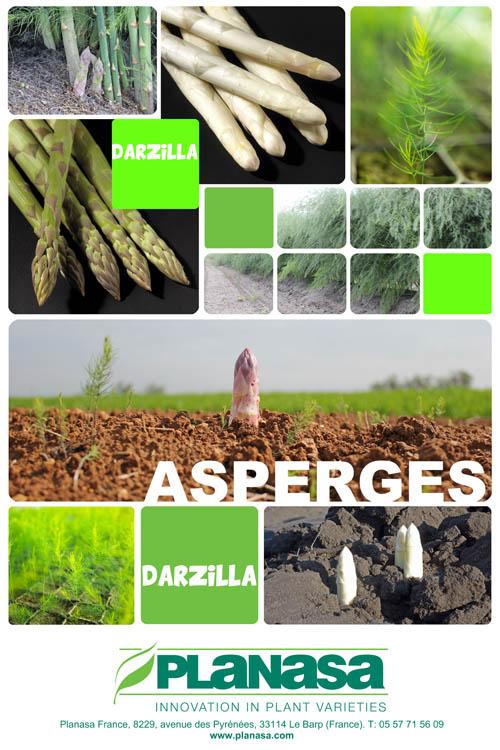 Affiche Asperge Darzilla